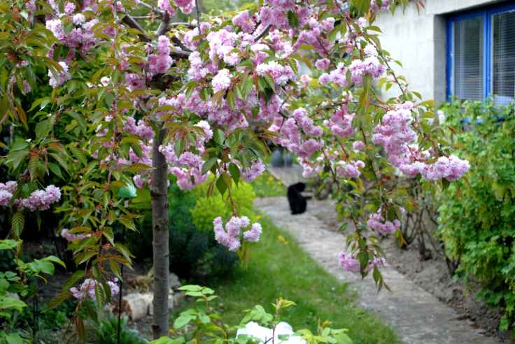 Patchwork Prunus Chat