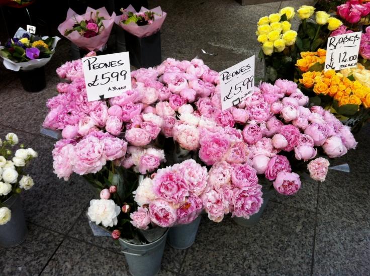 Londres Pivoines Roses