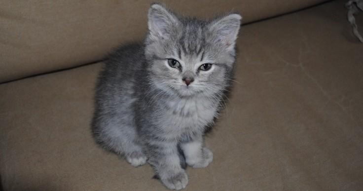 Strady quoi - chaton mignon