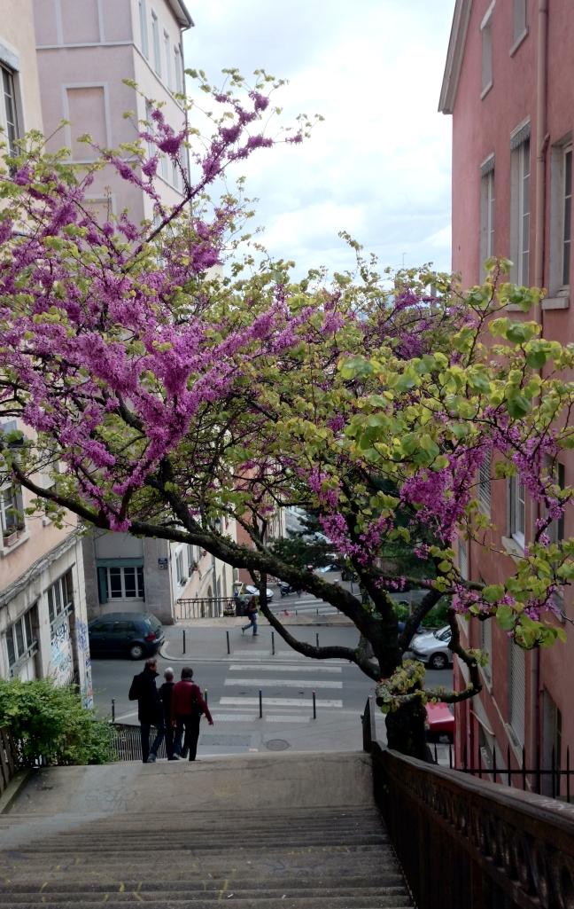 Week-end a Lyon - rue