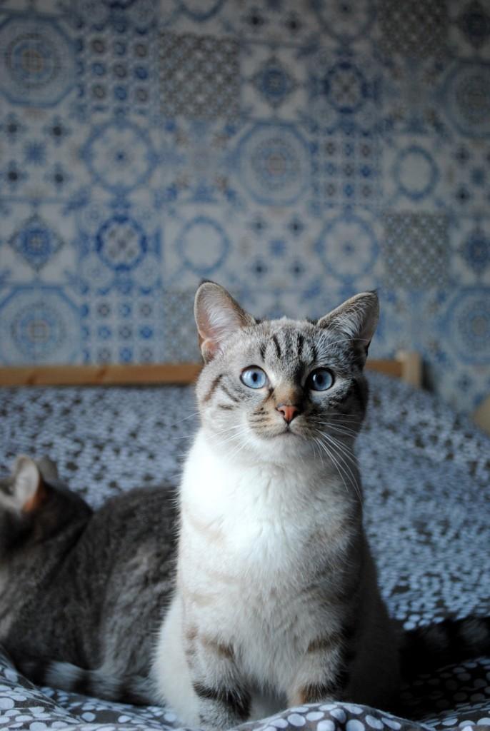 Papier peint azulejos 08