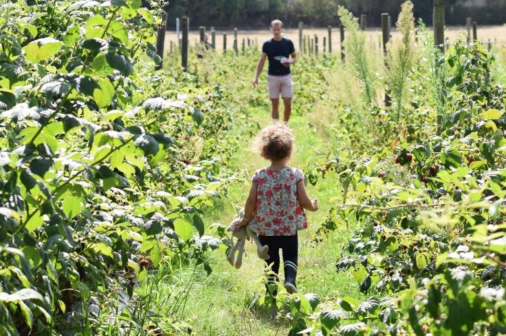 Cueillette fruits legumes enfant jardins montplaisir oise 01