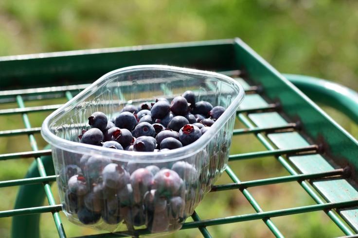 Cueillette fruits legumes enfant jardins montplaisir oise 02
