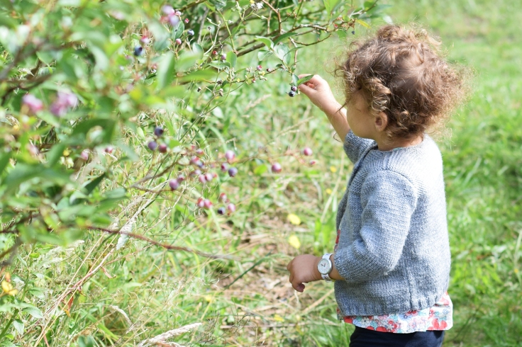 Cueillette fruits legumes enfant jardins montplaisir oise 04