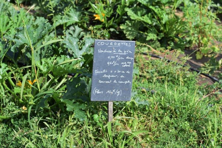 Cueillette fruits legumes enfant jardins montplaisir oise 05