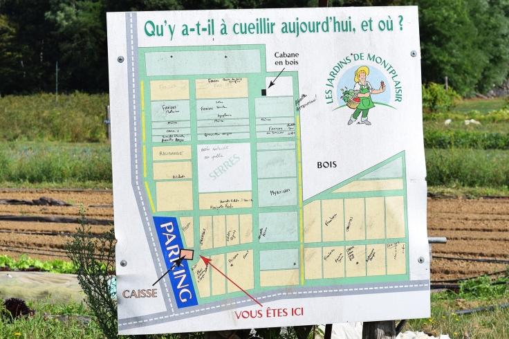 Cueillette fruits legumes enfant jardins montplaisir oise 07