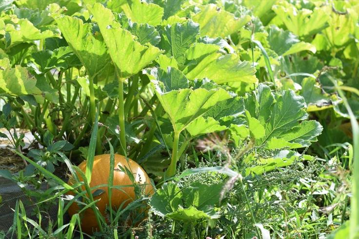 Cueillette fruits legumes enfant jardins montplaisir oise 08