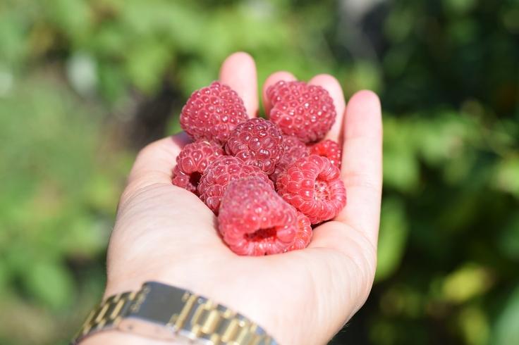 Cueillette fruits legumes enfant jardins montplaisir oise 09